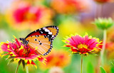 Beautiful butterfly sit on the flower