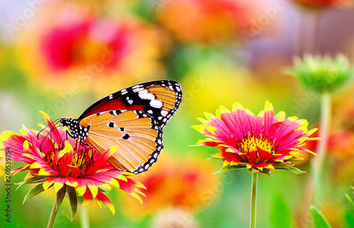 Beautiful butterfly sit on the flower - 260539754