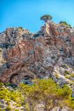 Wilde Serra de Tramuntana auf Mallorca