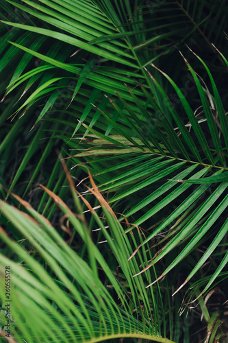 Tropical palm leaves, floral pattern background