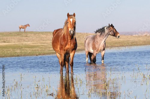 Three pony on the watering place © Geza Farkas