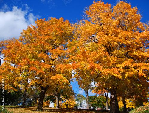 Fall landscape Quebec province Canada © Daniel Meunier
