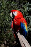 Aves Guacamaya