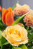 flower detail on orange tulip and rose
