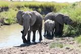 Elephant Masai Mara Africa