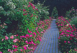 Pathway through the Rose garden of a country house