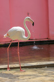 pink flamingo on a white background
