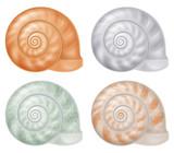 Set of seashells. Vector illustration. - 260719907