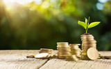 Investment Concept. Plant Growing In Savings Coins Money