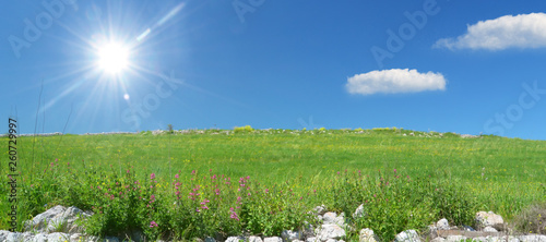 meadow with flowers and blue sky - 260729997