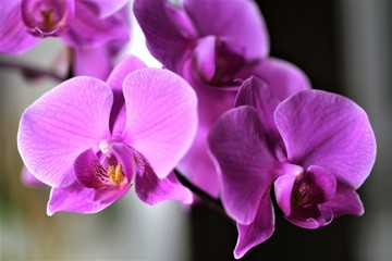An Image of a orchid