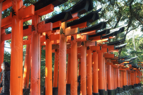 Fushimi inari taisha shrine in Kyoto, Japan - 260736532