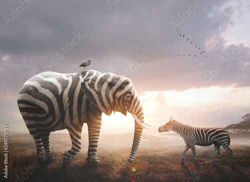 Elephant with zebra stripes - 260770759