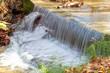 Bosque húmedo mediterráneo - 260797756
