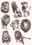 Graphical vintage set of lions ,vector sketch