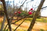 春の山の公園の風景6