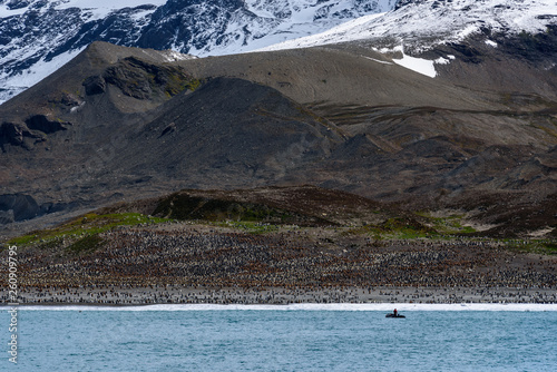Fototapeten Pinguine Large King Penguin colony at St. Andrews Bay, view from the water of the beach covered in penguins, person in inflatable raft headed to shore, South Georgia, southern Atlantic Ocean