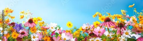 Leinwanddruck Bild Spring flowers