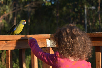Young girl feeding Green Rosella Birds in Tasmania Australia