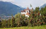Erntezeit in Südtirol
