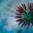 dandelion flower in springtime