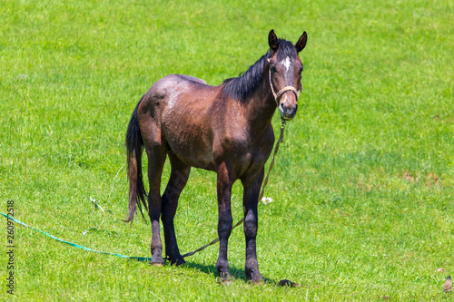 Portrait of a horse in the pasture in spring