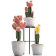 Gymnocalycium cactus in pot