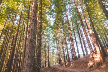 bosque de secuoyas      secuoyas park