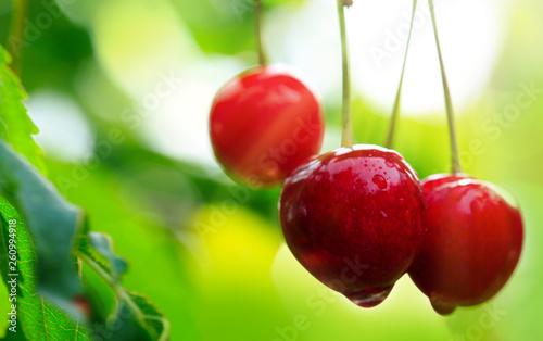 Macro shot on big red cherries. Nature background.