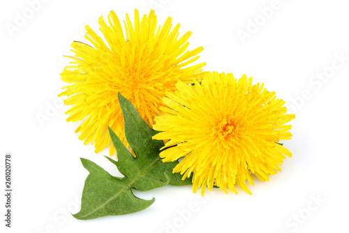 Dandelion flowers with leaf, isolated. - 261020778