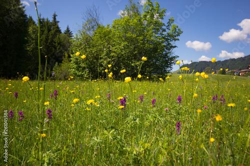 canvas print picture Frühlingswiese im Allgäu, Trollblumen und Knabenkraut
