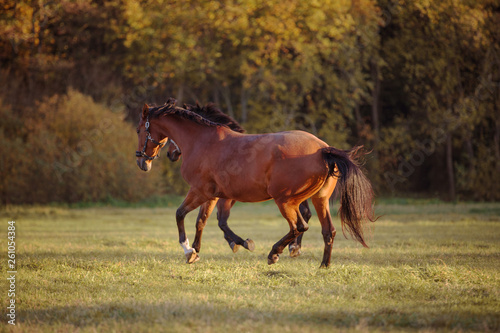 horses galloping in the green field