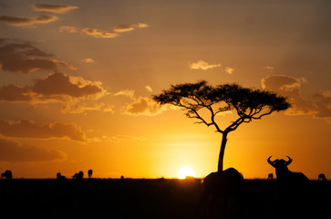 Silhouette of wildebeests during sunset, kenya © Dr Ajay Kumar Singh