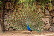 Leinwandbild Motiv Wild african animals