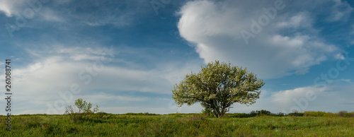 Landscape with lonely blossom tree - 261088741