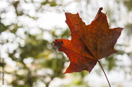 canvas print picture Herbstblatt im Wald