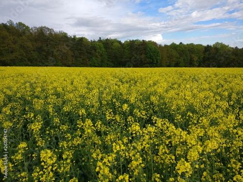 canvas print picture Rapsfeld in Bayern