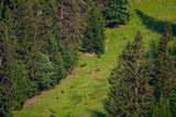 Deers grazing on a mountain slope