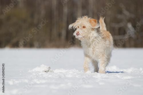 canvas print picture Hündin im Schnee