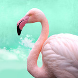 funny, bright pink flamingos in front of turquoise cloud sky, can be used as background