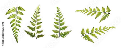 Set of ferns various views isolated on white background