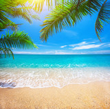 tropical beach with coconut palm - 261201548