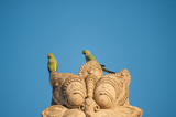 Two green parrots on the top of a statue. Blue background
