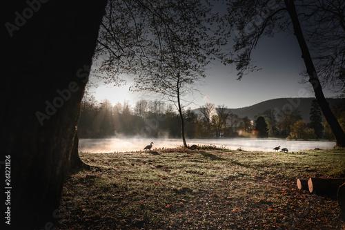 canvas print picture See im Nebel und Sonnenaufgang mit Ente