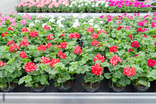 canvas print picture Blumen in einer Gärtnerei, Pflanzenzucht