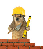 The dog builder in a safety helmet with a trowel and a level builds the brick wall. White background.