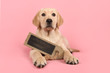 Pretty blond labrador retriever puppy holding a chalkboard with space for copy lying down on a pink background