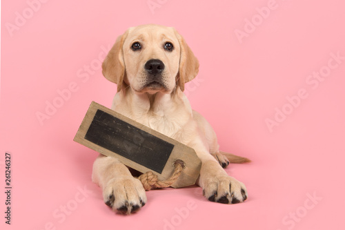 Pretty blond labrador retriever puppy holding a chalkboard with space for copy lying down on a pink background © miraswonderland