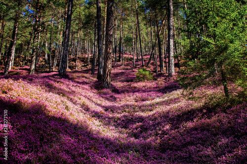Leinwanddruck Bild Spring dream