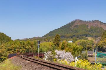 菜の花と桜と線路 canola flower and cherry blossoms and railroad line 大分県